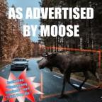 "Moose ""Old News"""